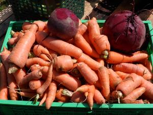 Rote Beete und Karotten